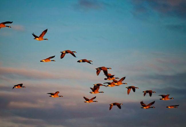 Από τη θάλασσα ζητώ τη νεότητα, από τον άνεμο τα ταξίδια των πουλιών… (Αγγέλα Μάντζιου)