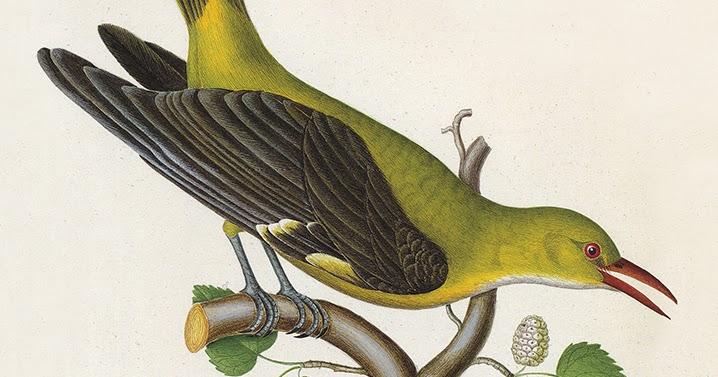 Τζάκομο Λεοπάρντι – Εγκώμιο των πουλιών *βιβλιοκριτική