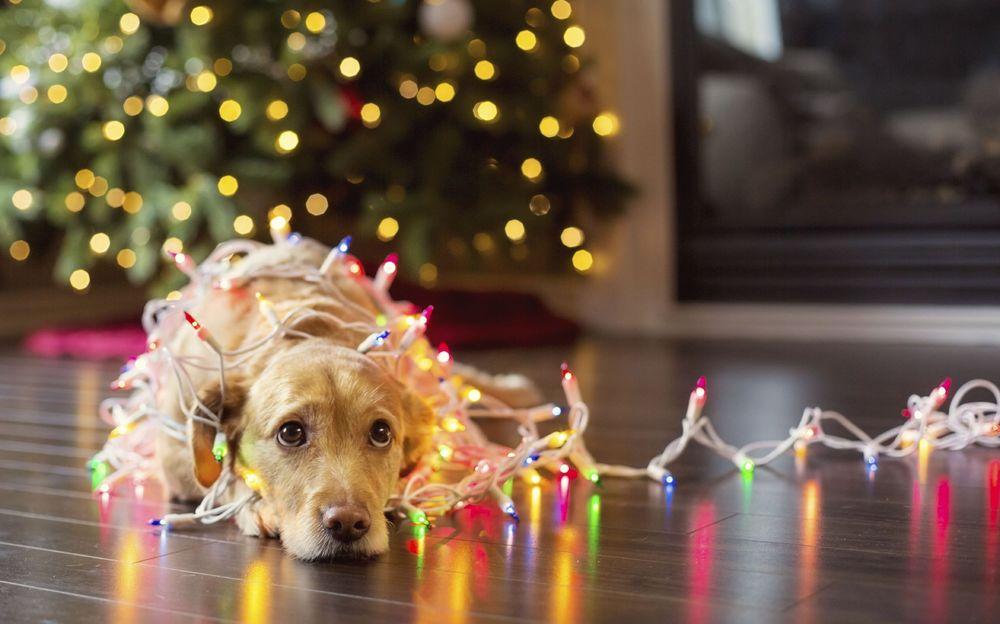 Αντιπρόταση Χριστουγέννων