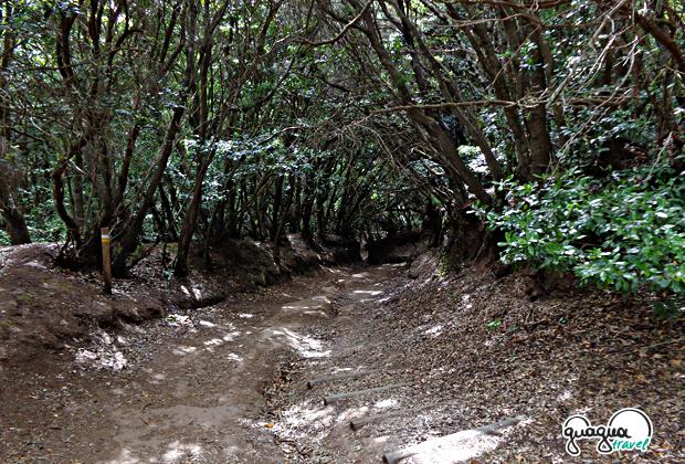Τενερίφη… ένα από τα πράσινα πανέμορφα νησιά των Καναρίων